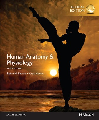 Test Bank for Human Anatomy and Physiology Global Edition 10th Edition Marieb ISBN-10: 1292096977