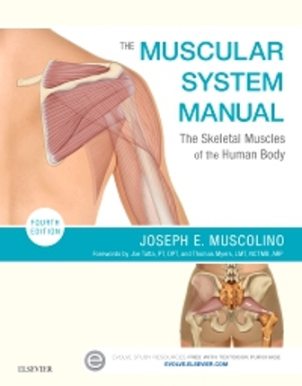 Test Bank for The Muscular System Manual, 4th Edition by Muscolino