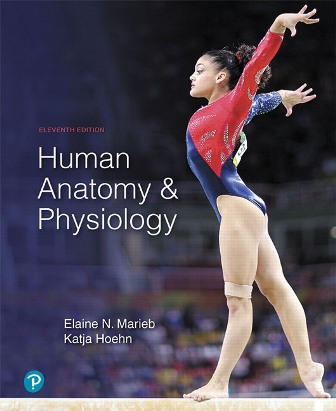 Test Bank for Human Anatomy and Physiology, 11th Edition Marieb